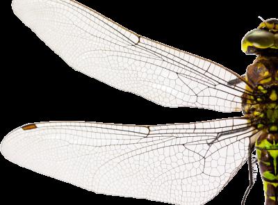 Bionik Topologieoptimierung - Entwicklung&Konstruktion